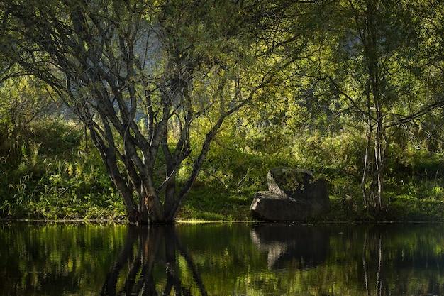 Árvore e pedra no lago de montanha. reflexão.