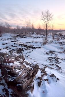 Árvore e pedras na madrugada de inverno