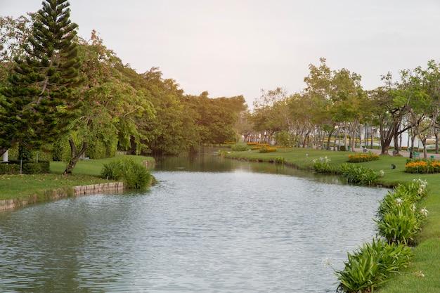 Árvore e planta com lagoa no jardim.