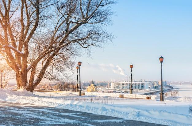Árvore e vista do gato alexander nevsky