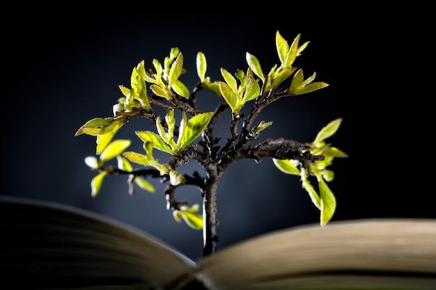 Árvore em crescimento com folhas verdes de um livro aberto