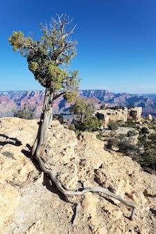 Árvore em frente ao grand canyon, eua
