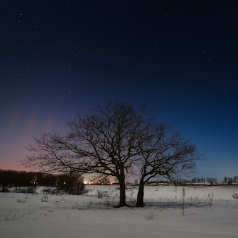 Árvore em um fundo do céu estrelado à noite no inverno.
