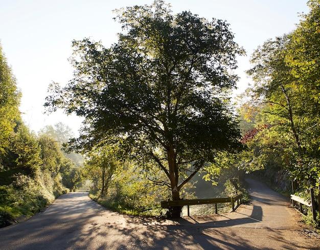 Árvore em uma curva da estrada iluminada por luz de fundo