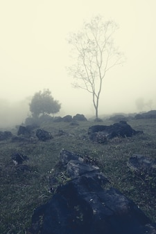 Árvore frágil e nua sobre uma colina rochosa em meio a uma névoa leitosa em aquismon, huasteca potosina, méxico
