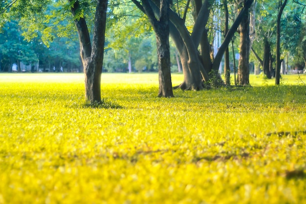 Árvore fresca e natureza do summer park