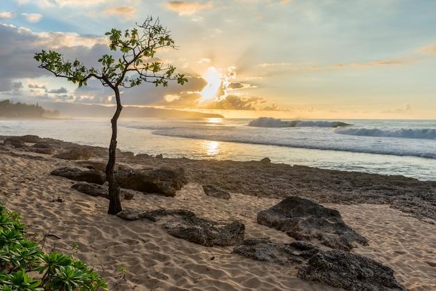 Árvore guarda-chuva, em, ponto rochoso, ligado, a, norte, costa, de, oahu, havaí, em, pôr do sol, com, alto, surf, areia, e, coral