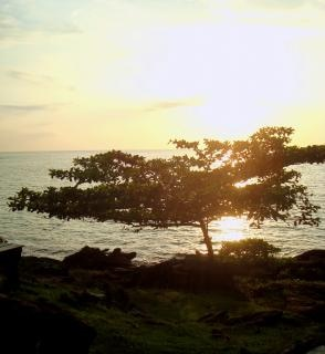 Árvore ilha tropical ao pôr do sol