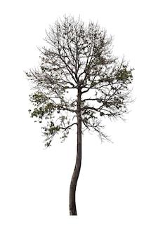 Árvore isolada no fundo branco. traçado de recorte