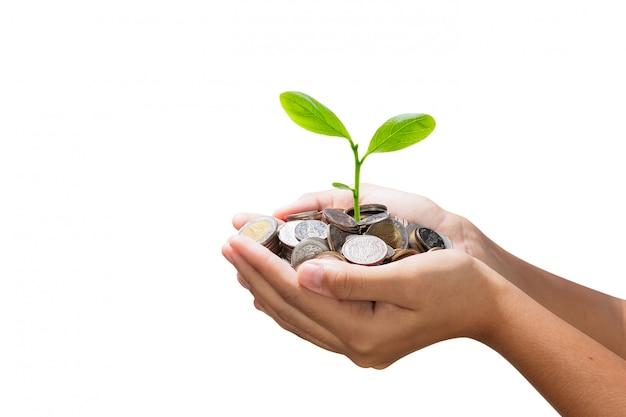 Árvore jovem que cresce na pilha de dinheiro na mão isolado