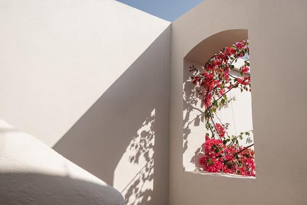 Árvore linda planta tropical com flores vermelhas na janela do edifício bege com sombras de luz solar.