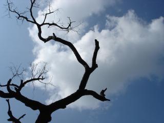 Árvore maluco