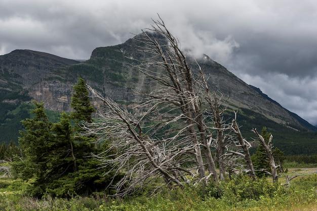 Árvore morta, com, alcance montanha, em, a, fundo, muitos, geleira, parque nacional geleira, geleira, município