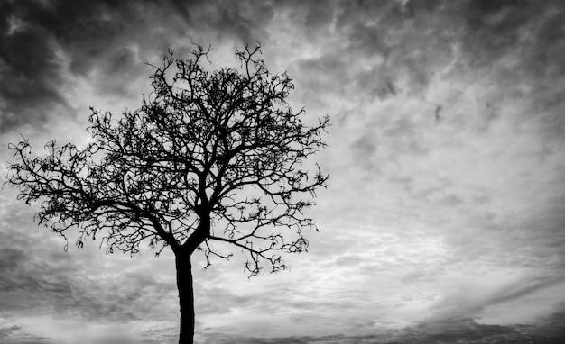 Árvore morta de silhueta no fundo do céu escuro para assustador ou morte