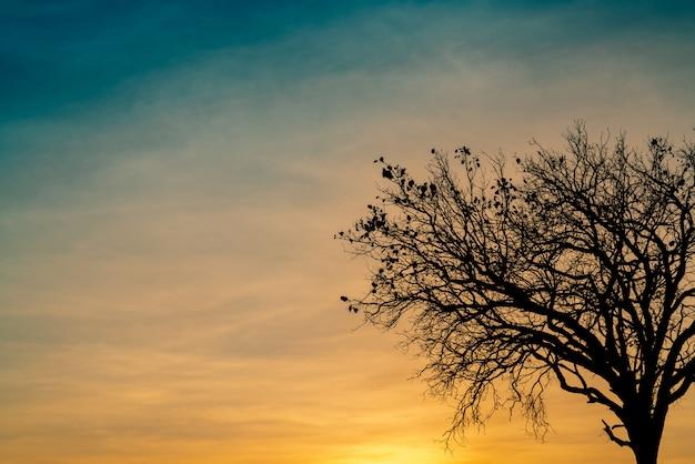 Árvore morta de silhueta no pôr do sol ou nascer do sol no céu dourado