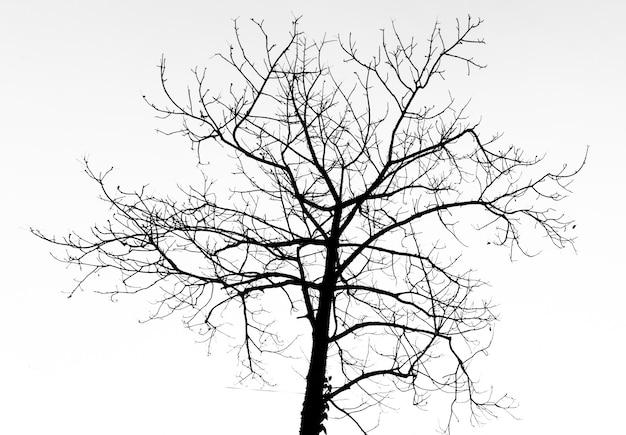 Árvore morta de silhueta para o festival de halloween.