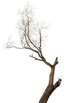 Árvore morta e seca isolada no fundo branco