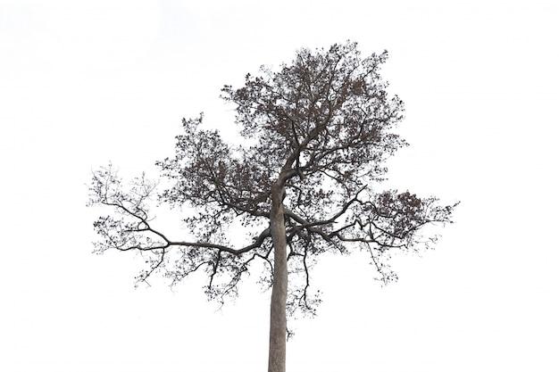 Árvore morta e seca