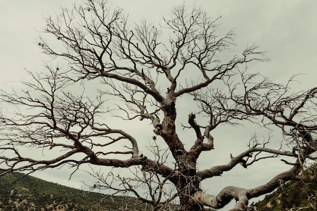 Árvore morta na floresta