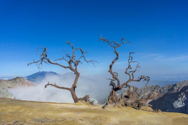 Árvore morta na montanha em dia de sol