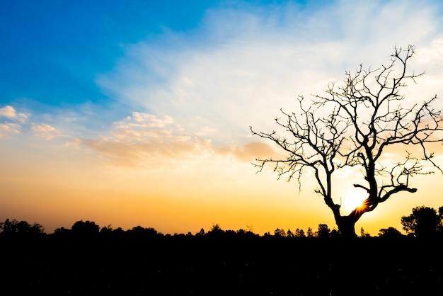 Árvore morta solitária durante o pôr do sol para o conceito de dia mundial da terra
