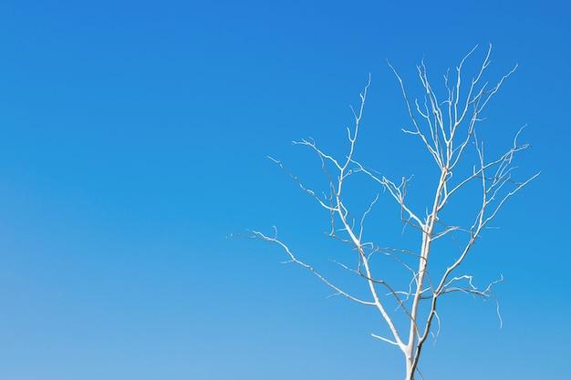 Árvore morta sozinha contra o céu azul