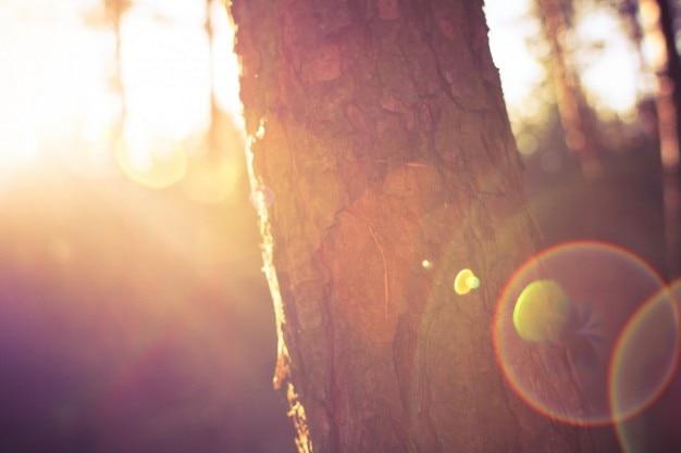 Árvore na manhã