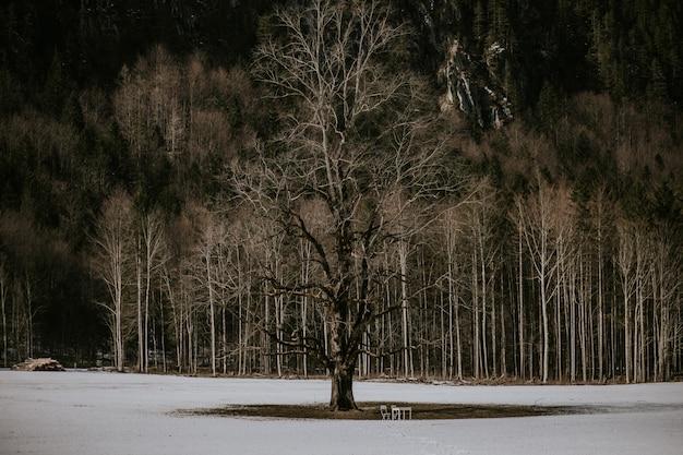 Árvore na natureza
