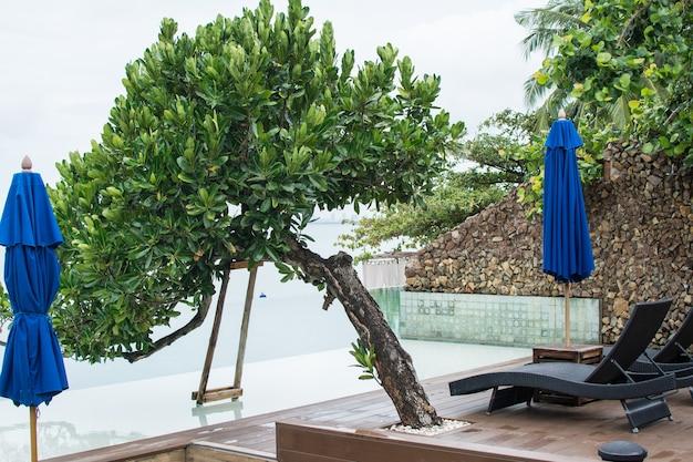 Árvore na piscina do hotel