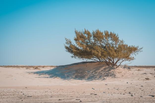 Árvore nas dunas