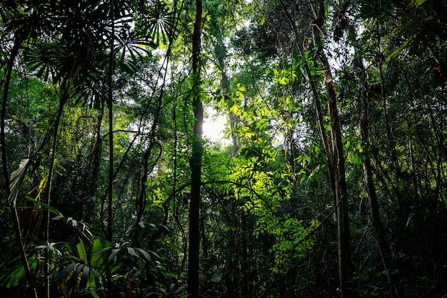 Árvore natural na floresta à tarde com a luz do sol e a sombra da árvore.