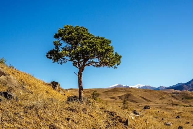Árvore no campo em dia ensolarado