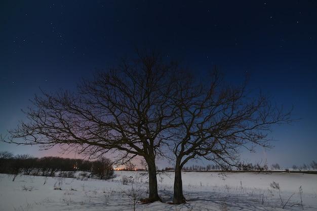 Árvore no céu estrelado à noite no inverno.