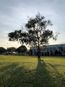 Árvore no parque sombra de árvore na grama