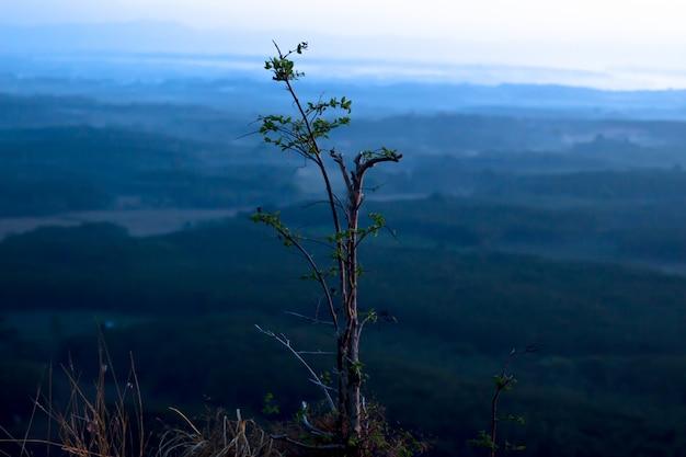 Árvore no topo da colina