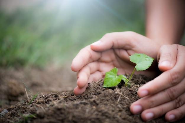 Árvore nova com solo no fundo. conceito do dia da terra.