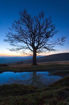 Árvore nua de outono solitária no topo de uma montanha à noite na última luz do pôr do sol (e seu reflexo em uma poça)