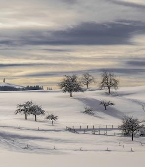 Árvore nua em solo coberto de neve durante o dia