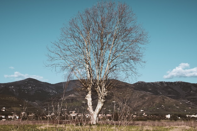 Árvore nua em um campo com montanhas