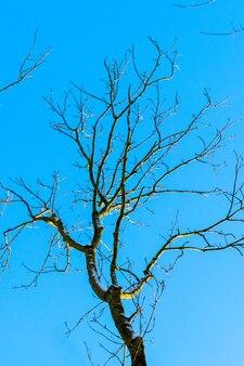 Árvore nua em um fundo de céu azul com tempo ensolarado