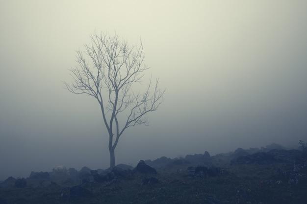 Árvore nua solitária e vaca branca em meio a uma névoa leitosa em encostas rochosas em aquismon, huasteca potosina, méxico