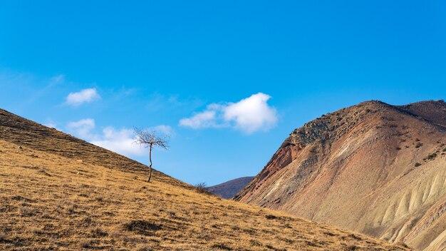 Árvore nua solitária na encosta da montanha