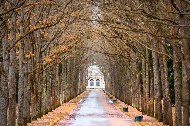 Árvore oaks túnel de primavera e a estrada