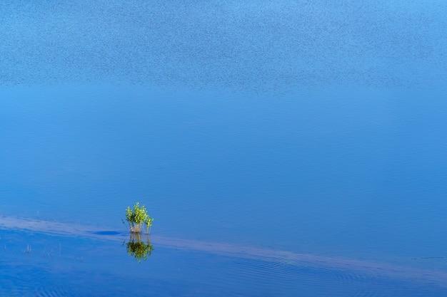 Árvore pequena no meio de um lago de água azul e reflexos na água.