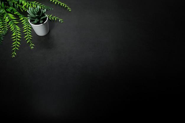 Árvore pequena verde e folha verde contra fundo escuro vazio