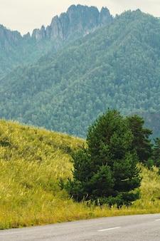 Árvore perto da estrada nas montanhas