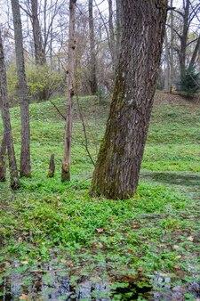 Árvore perto de um lago coberto de mato