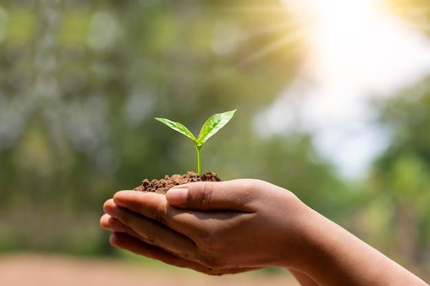 Árvore plantada por mão humana com fundo verde natural, proteção ambiental e conceito de crescimento de plantas