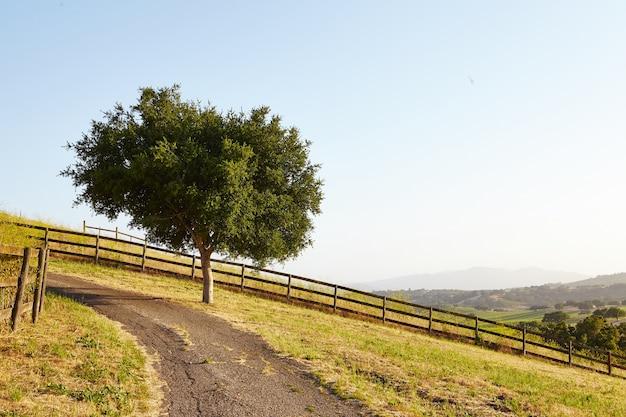Árvore por estrada de terra