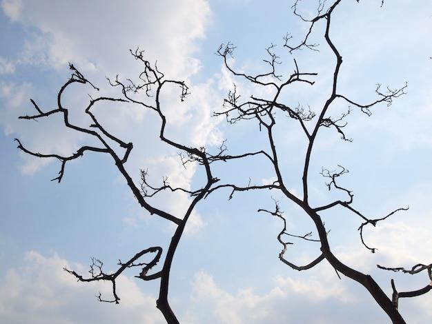 Árvore preto e branco, sem silhueta de folhas